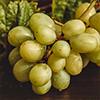 szőlőmag-olaj