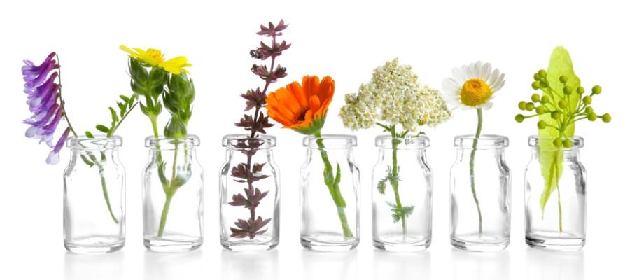 Nagora gyógynövények