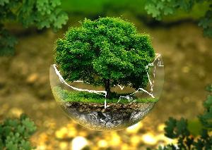 """Tippek a """"zöldséghez"""" – azaz hogyan tehetünk a Földünkért"""